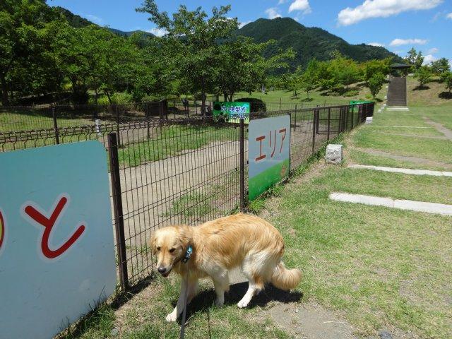 本栖湖 犬 2015-7-22 107