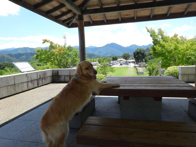 本栖湖 犬 2015-7-22 108