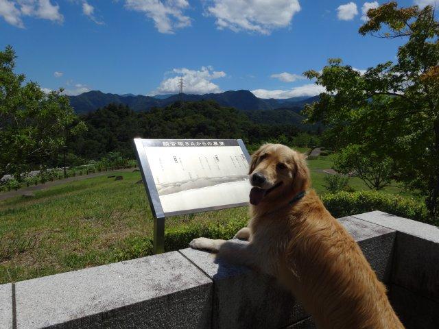 本栖湖 犬 2015-7-22 109