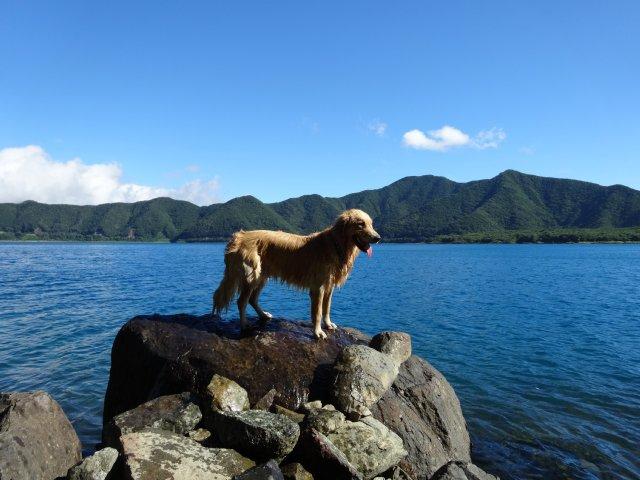 本栖湖 犬 2015-7-22 034