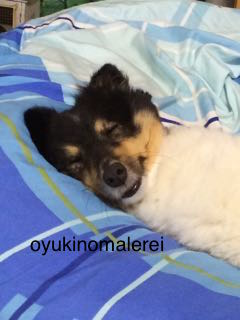 笑寝顔2015.7.30
