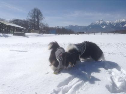雪遊び16