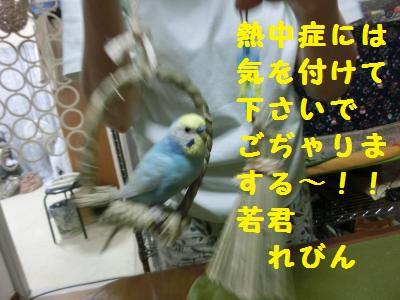 CIMG3707_convert_20150807213210.jpg