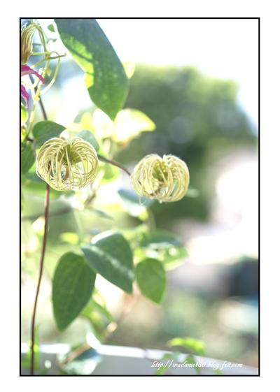 ダイアナ花球web用