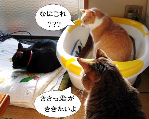 きなっちゃん社長&雲丹専務&ささっちゃん部長