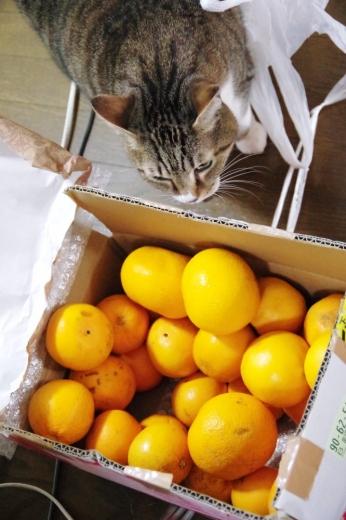 謎の柑橘類