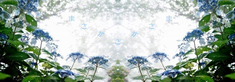 DSCsymmetric - コピー (2)