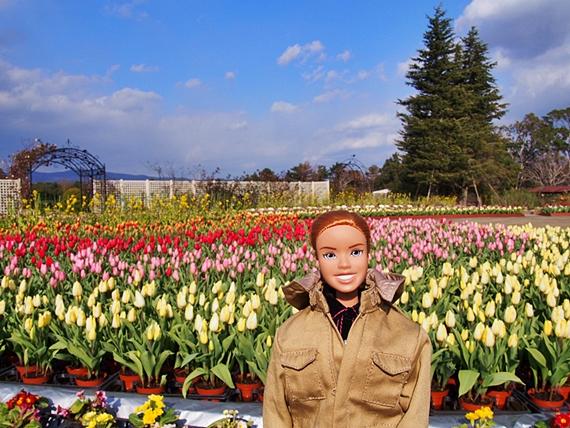 flower-20150111-01s.jpg