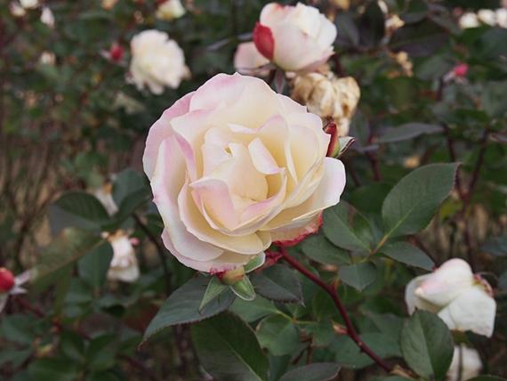 flower-20150111-10s.jpg