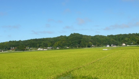 緑一面の田舎の風景