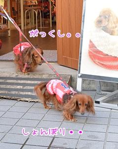 20141101_11.jpg