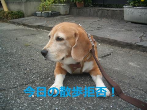 CIMG4893.jpg