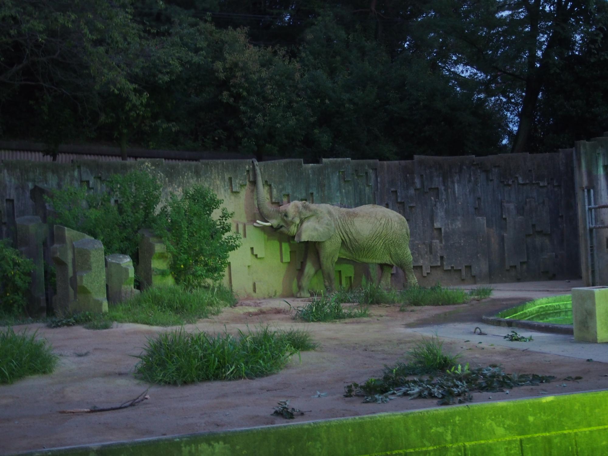 象さん歩く
