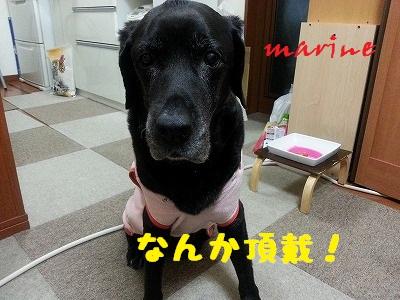 20150110marine5.jpg