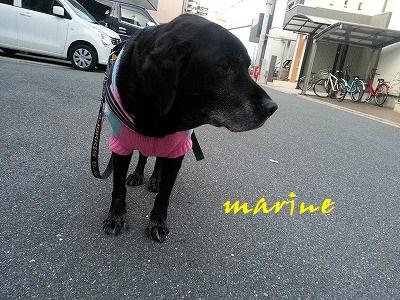 20150129marine2.jpg