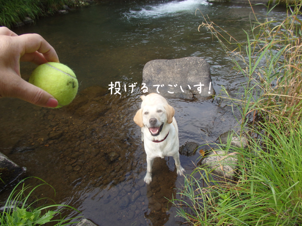 kawa1_2015080508385000b.jpg