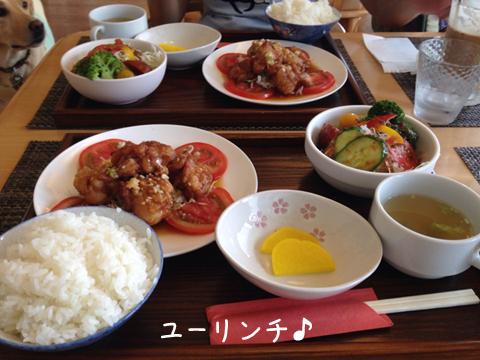 lunch_20150808172522adb.jpg