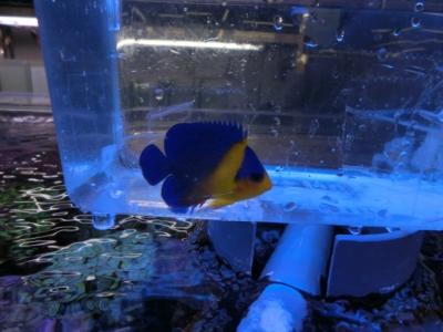 海水魚 753