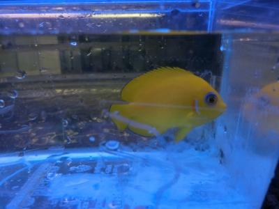 海水魚 750