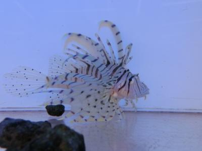 海水魚 755