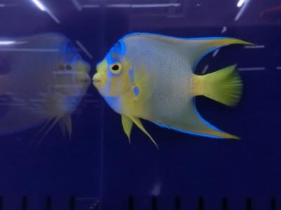 海水魚 754