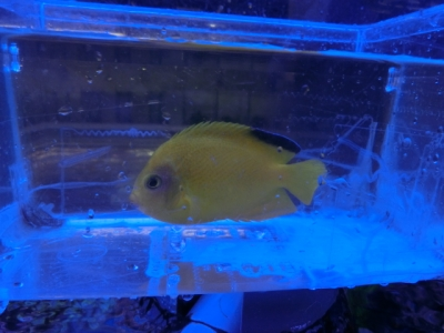 海水魚 759