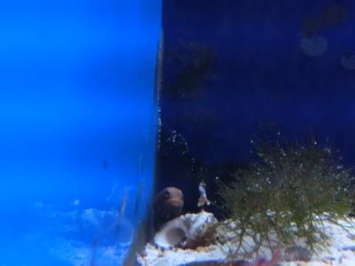 海水魚 760