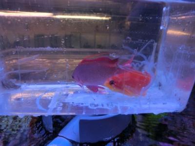 海水魚 762