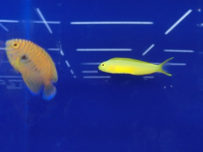 海水魚 764