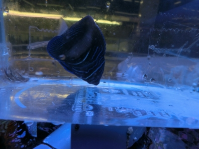海水魚 770