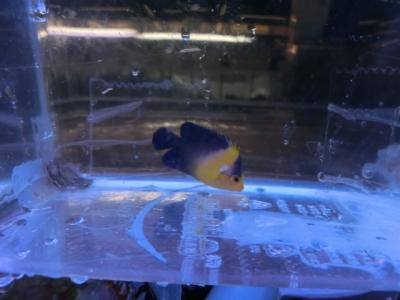 海水魚 769