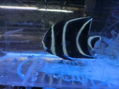 海水魚 771
