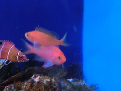 海水魚 774