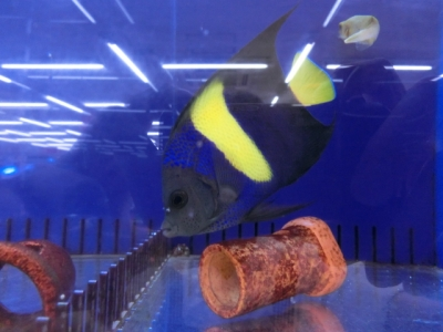 海水魚 777