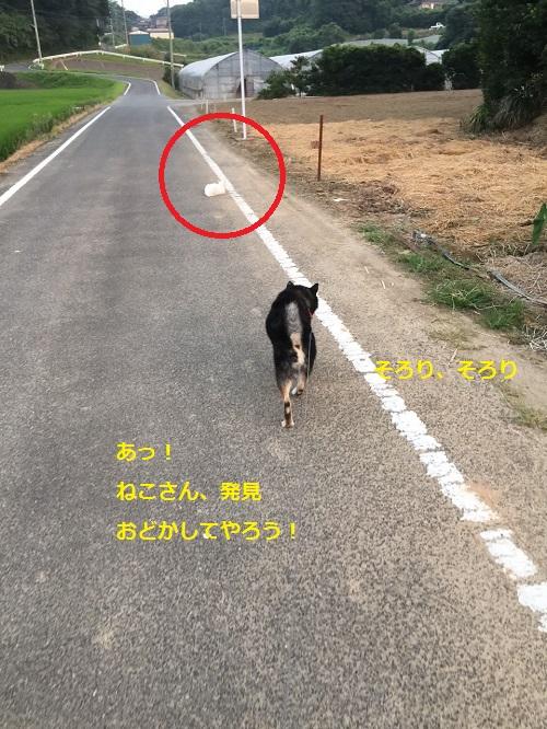 まるちゃん2015082201