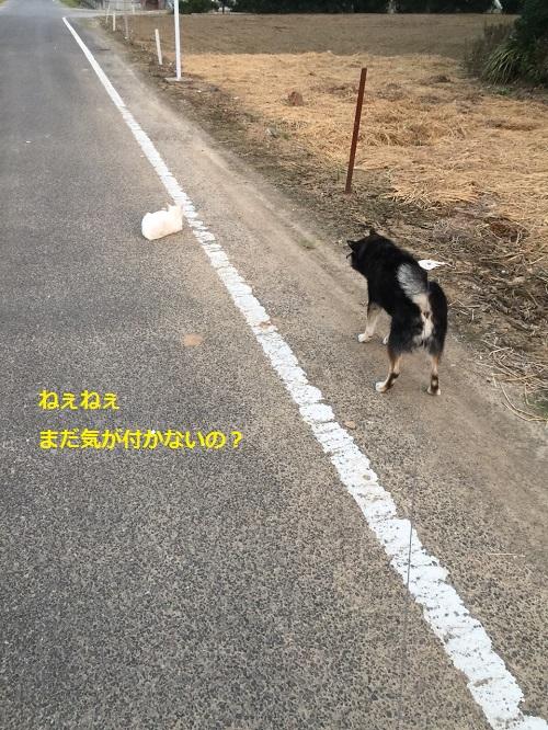 まるちゃん2015082203