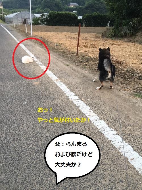 まるちゃん2015082204