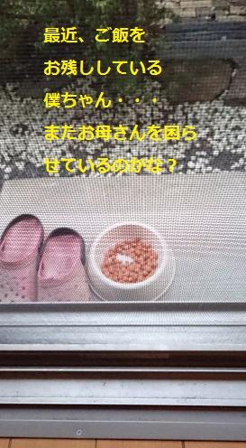 まるちゃん2015082401