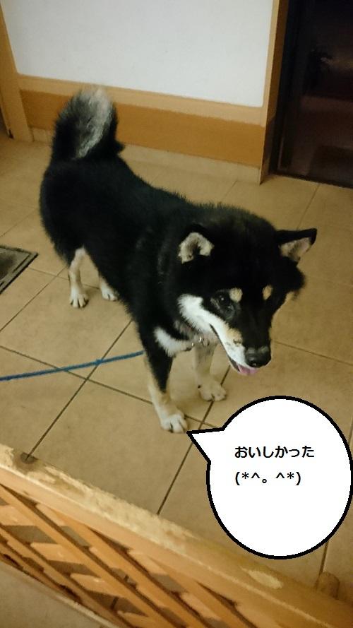 まるちゃん2015082406