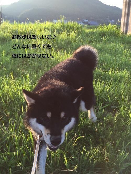 まるちゃん2015082501