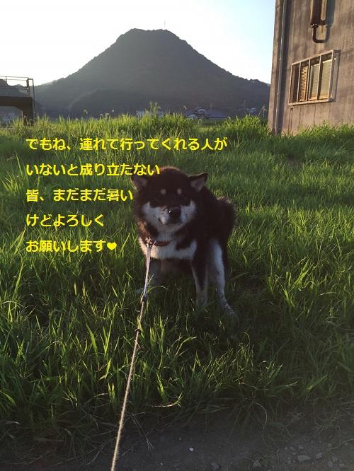 まるちゃん2015082502