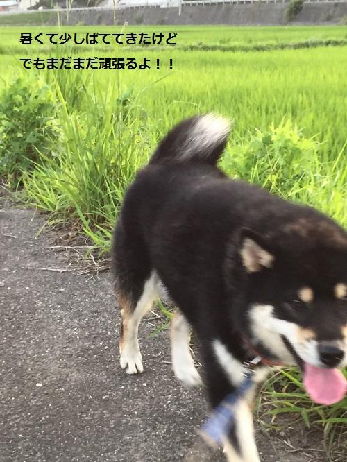 まるちゃん2015082503