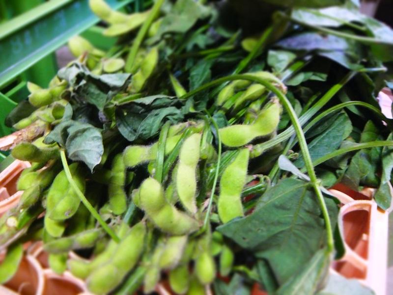 おすそわけ 枝豆