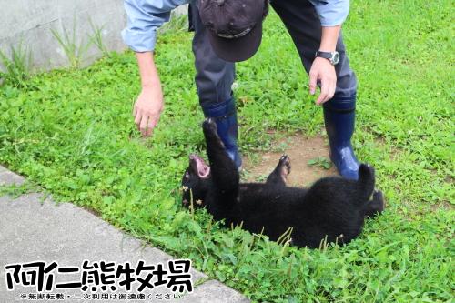 阿仁熊牧場 子熊 体重当て第4回