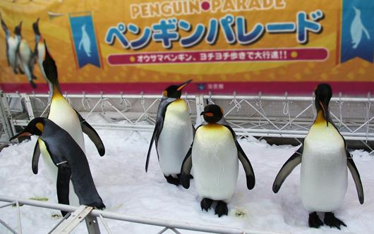 ペンギンくんがお出迎え