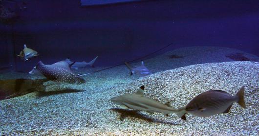 海底の仲間たち