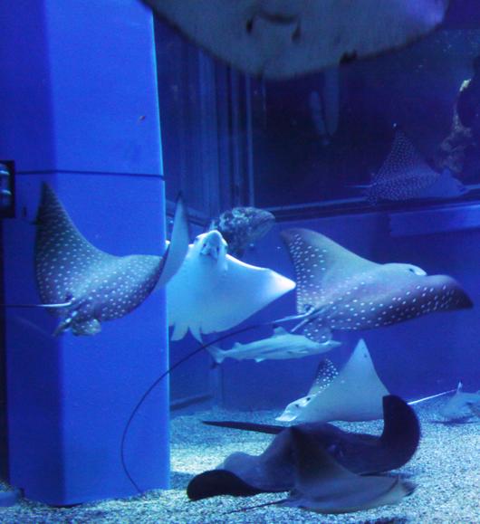 海底の仲間たち5