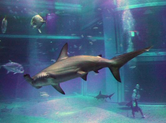怖そうな鮫