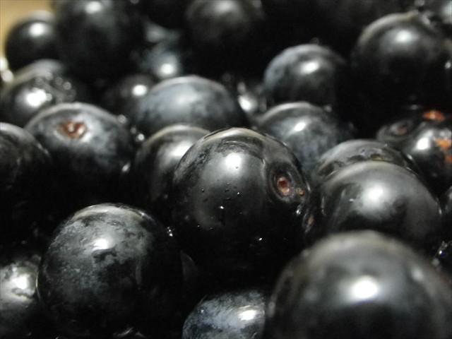 ブルーベリーを収穫-2