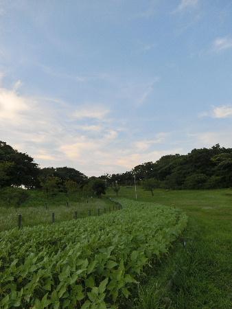 150726K公園1